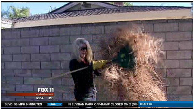 Cleaning Up The Northridge Community   Los Angeles Local News   FOX 11 LA KTTV
